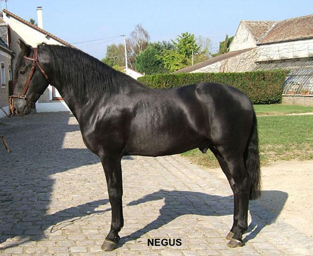 Son père - Negus VII